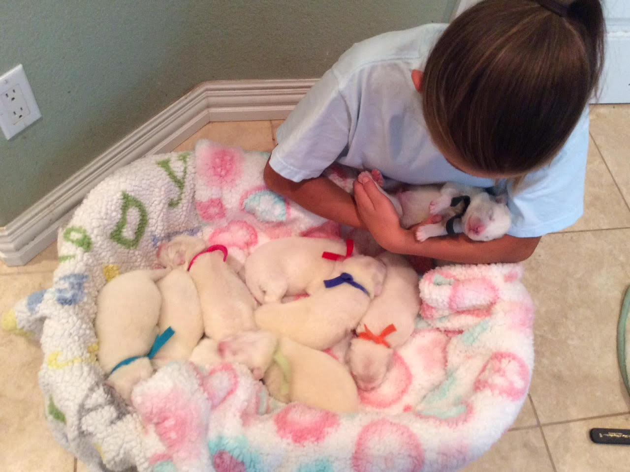 Isabella & pups