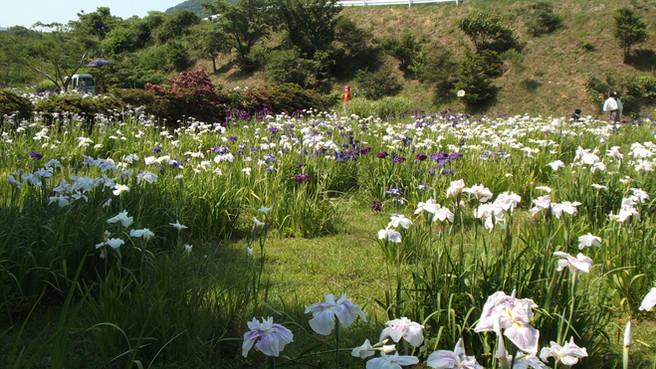 藤本菖蒲園