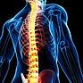 coluna-vertebral.jpg