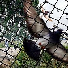 vogelnetten.jpg