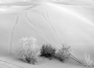 Iranian Desert