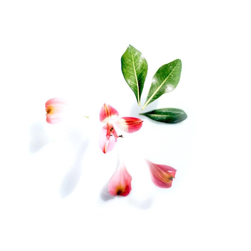Botanical Consultation