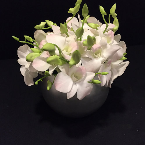 LUXURIOUS White Orchids
