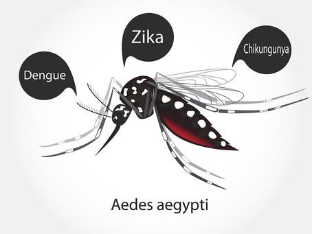 Casos de dengue crescem 560% no Brasil em 2019