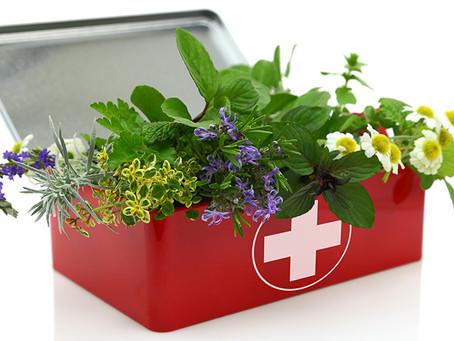 Farmácia no quintal: 10 plantas que você deveria ter em casa