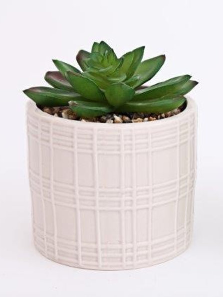 White Potted Succulent