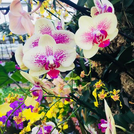 Kew Garden Orkide Festivali 2018