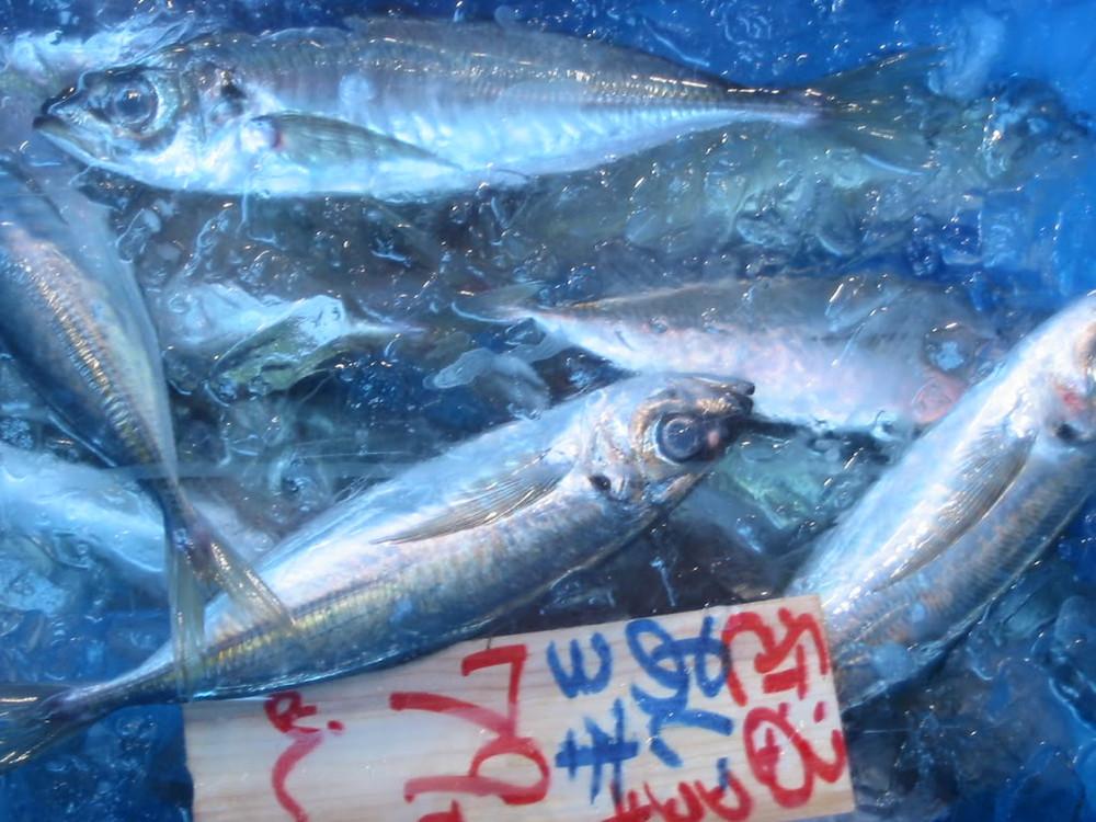 Saison, Chinchard アジ photo prise dans une poissonnerie de Kugahara 久が原 à Tôkyô東京 au Japon