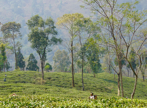 Escape to Darjeeling: a Journey to India's Northeast