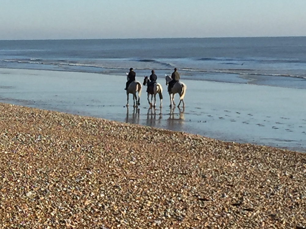 Horses on the beach at Norman's Bay