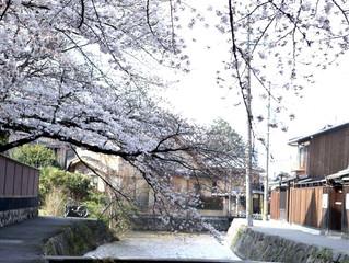3/27❀京都の桜❀