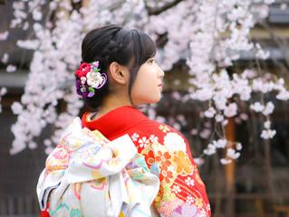 桜と成人式前撮り❀