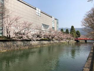 京都の桜☆