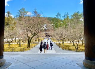 桜の開花状況❀南禅寺・哲学の道