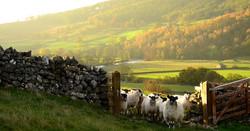 Yorkshire Dales1.jpg