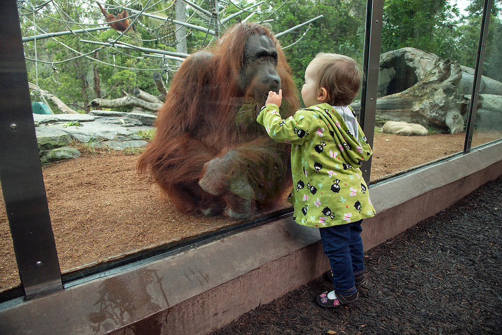 san diego zoo, world famous san diego zoo, animals in san diego, san diego toddlers