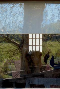 Fenêtre d'arbre.  Reflets, dessins, visions surréalistes.