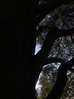 Profil d'arbre.  Matières, dessins, figures, surréalisme.