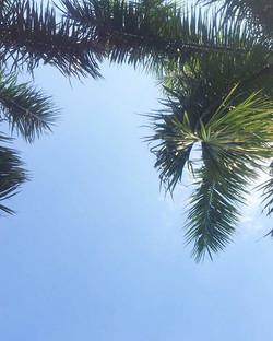 Natural shade