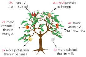 Have you heard of the Miracle Tree?
