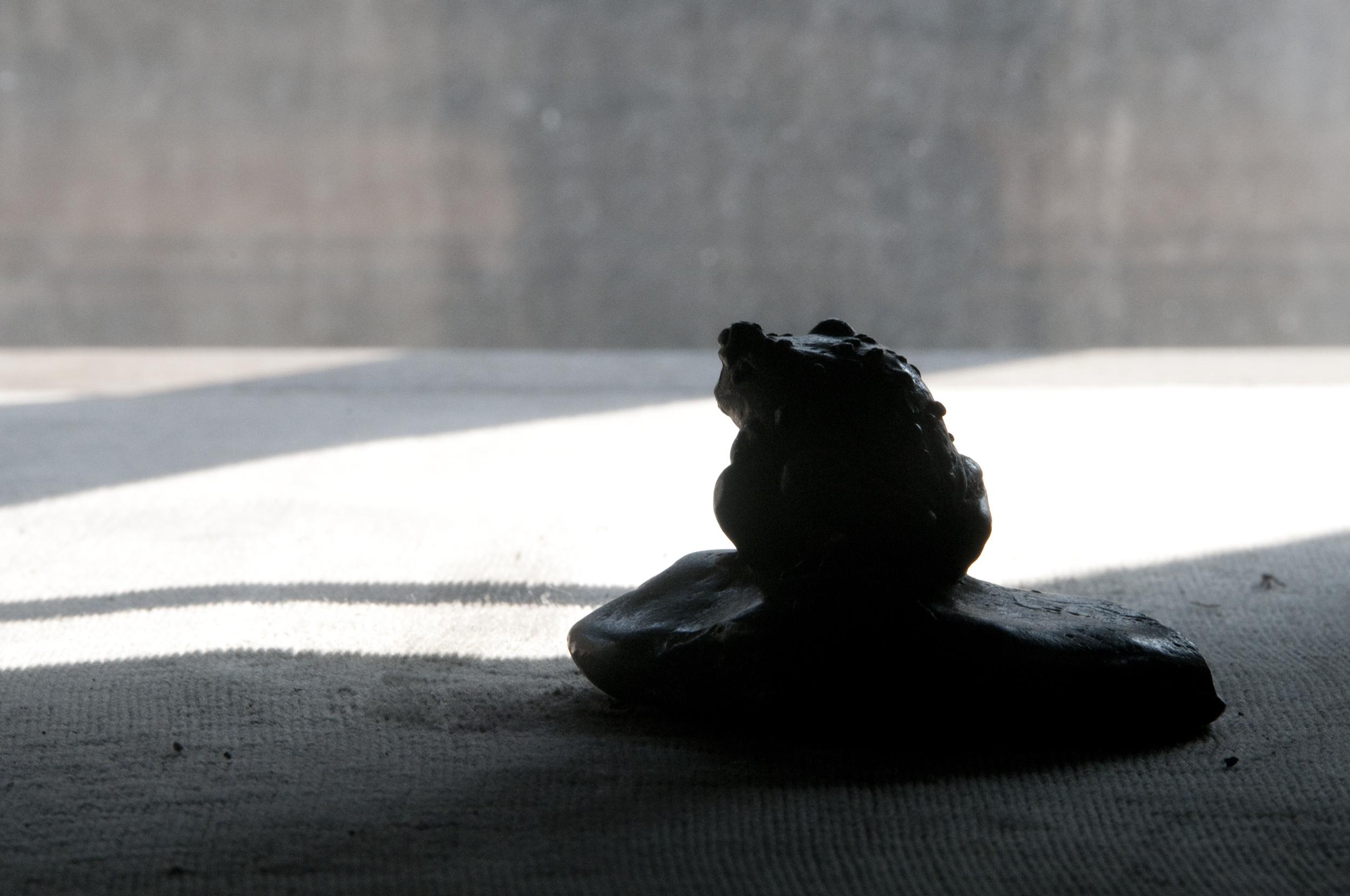 Il rospetto meditabondo