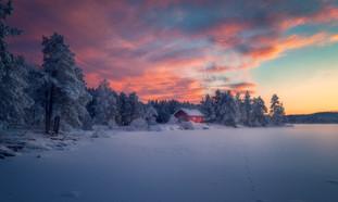 Adorned in Winter