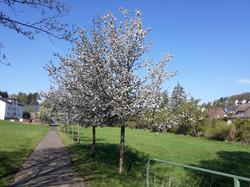 2021-05-13 Baumblühte in der Furte (12)