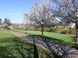 2021-05-13 Baumblühte in der Furte (7)