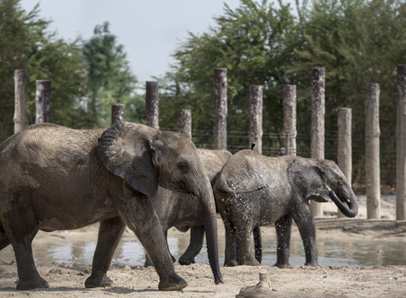 Dubai Safari Park re-opens its doors