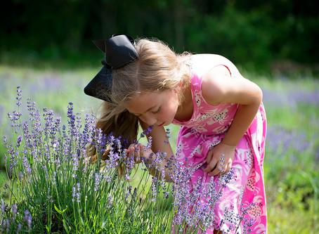 Bell   Lavender Farm Session
