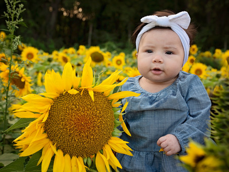 Hausbach | Sunflower Field Photography | Thistleberry Farms, South Bend, Indiana