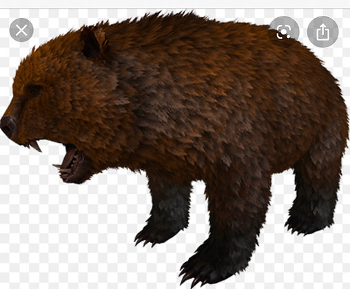 Dire bear (Buy2get1free)( Official Xbox PvP )