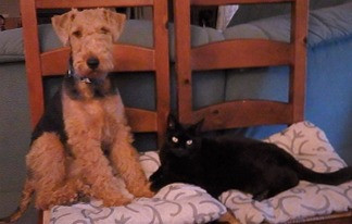 Pebble a Terrier sitting on a chair with his cat friend.
