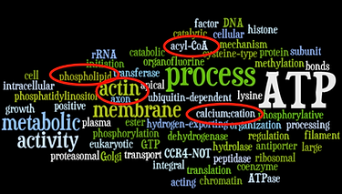 Word cloud of functional genes detected as outliers - Janes et al. 2014