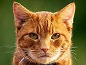 Feral cat genetics