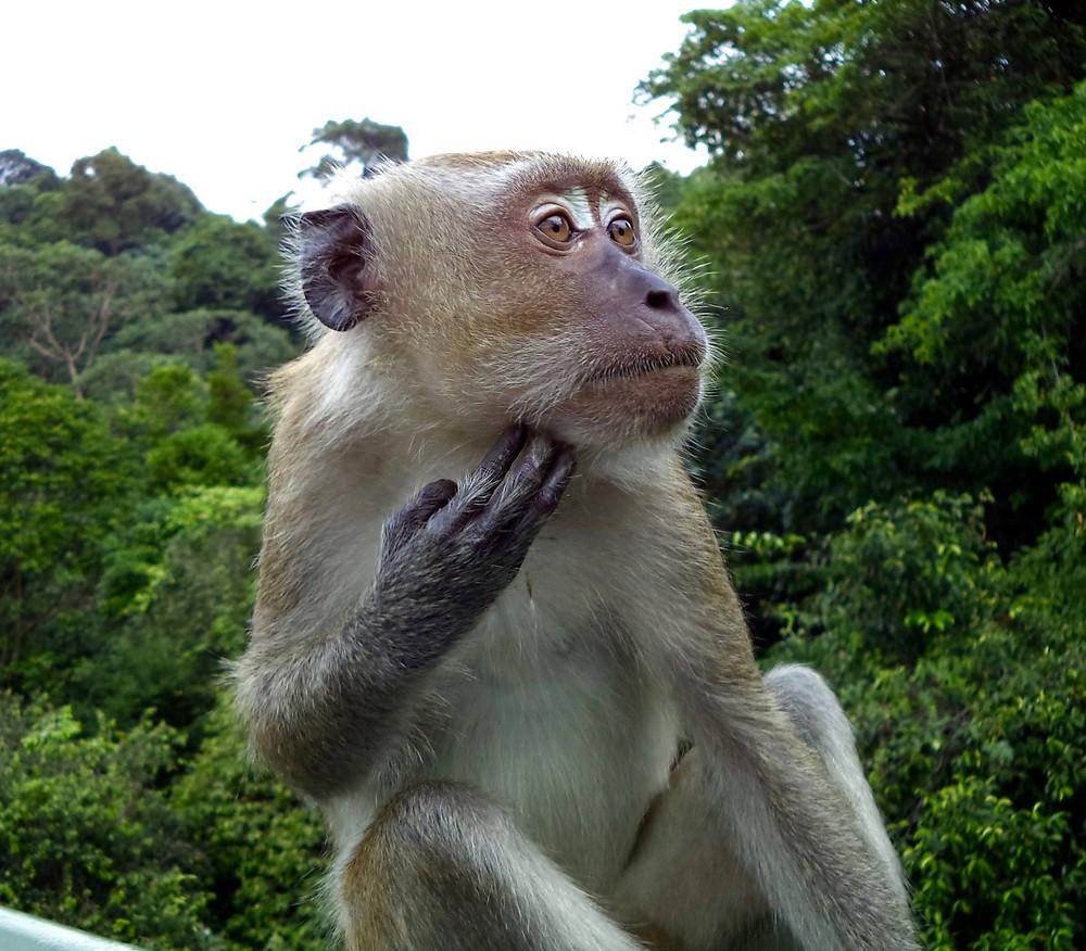 thoughtful survey monkey