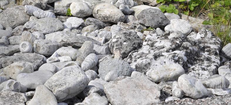 Fossil på Gotland