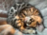 brown charcoal girl corrine.JPEG