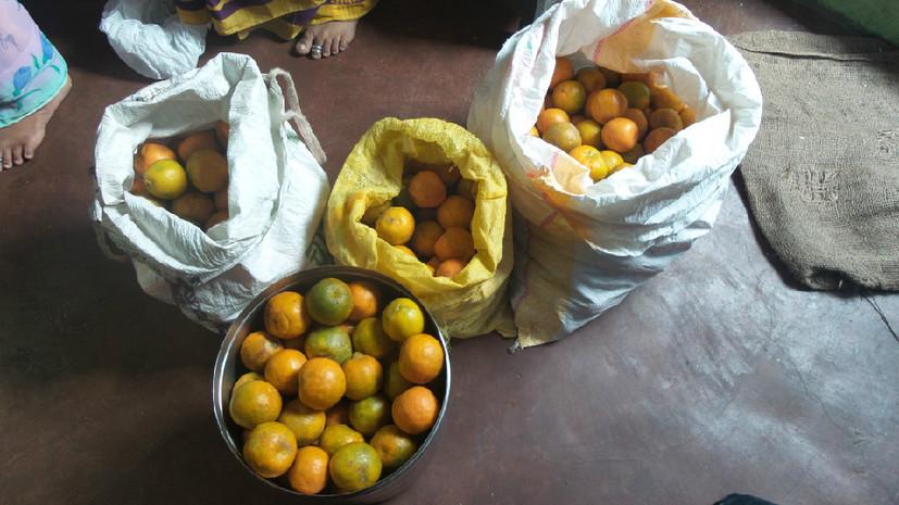 fruit for kids.jpg