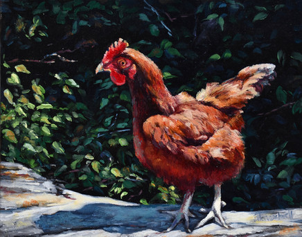 Montana Brown Chicken
