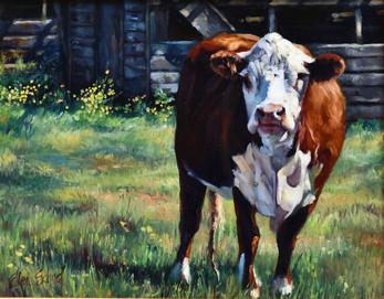Old Farmhouse Cow