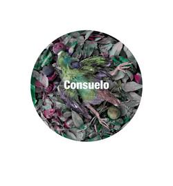 Consuelo300.jpg