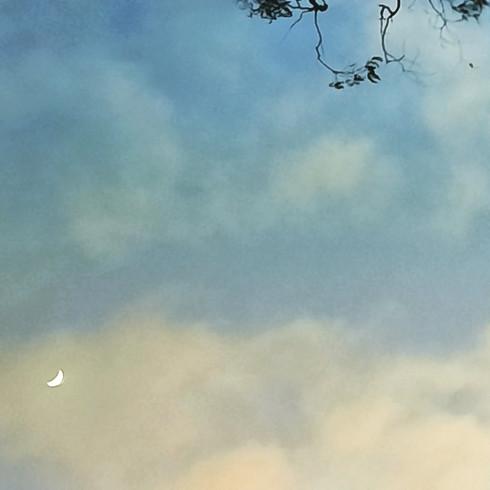 Moon sky branch