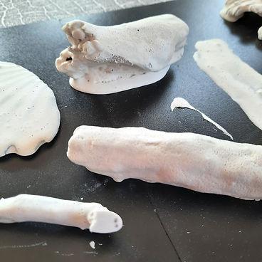 Plaster specimens 1