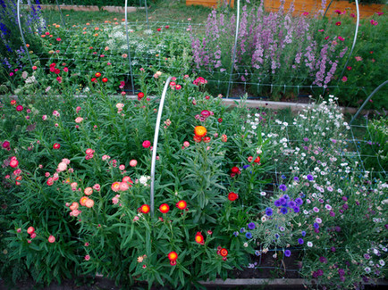 The Flower Beds