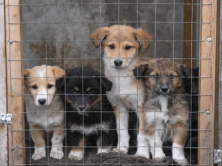 В День добра Волонтерская Рота запустила акцию помощи бездомным  животным в приютах