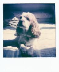 Polaroid  95 copy.JPG