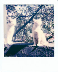 Polaroid  108 copy.JPG