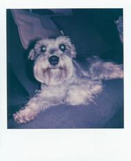 Polaroid  175 copy.JPG