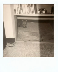 Polaroid  186 copy.JPG